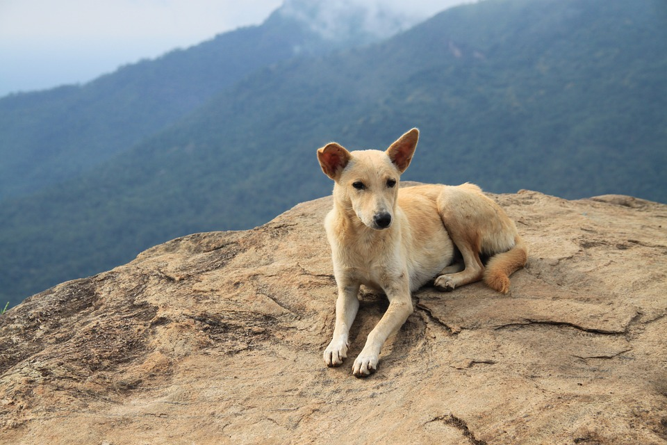 Does Your Travel Insurance Include Pet Return Coverage?